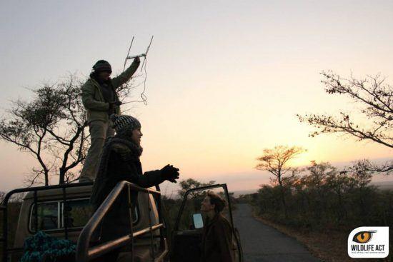 Ser voluntario en Wildlife ACT, una experiencia única