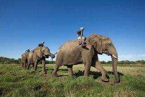 Éléphants au Elephant Sanctuary, Afrique du Sud