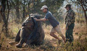 Simon, miembro de la asociación, ayudando a levantar a un rinoceronte