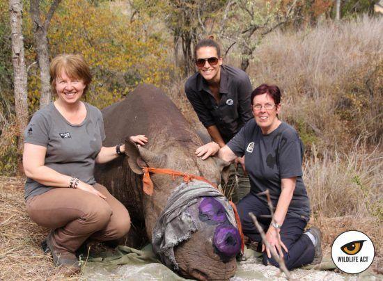 Bénévoles de l'association de Wildlife ACT contre le braconnage des rhinocéros en Afrique du Sud