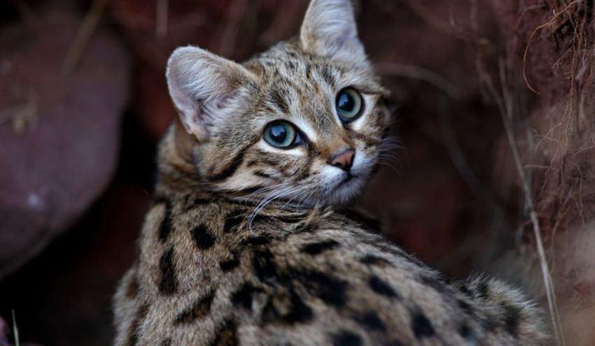 Rencontres chat en Afrique du Sud
