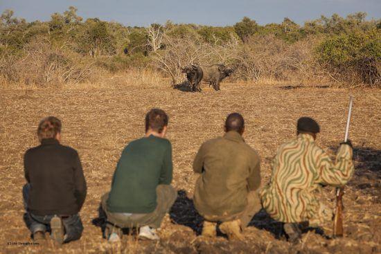 Grupo de pessoas se posiciona na mata para observar búfalo