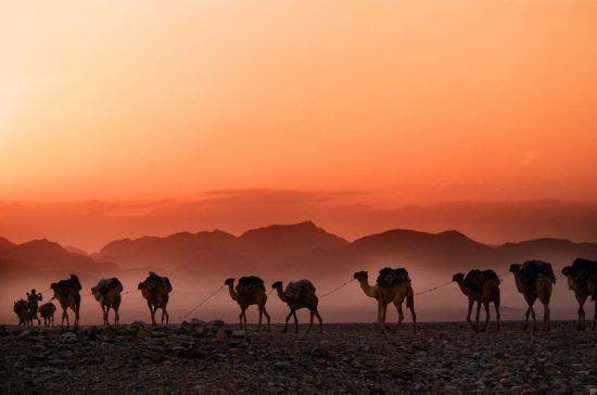 A camel caravan at dusk in Ethiopia. From Unsplash - no credit required.