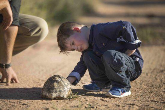 Ein Junge nimmt eine Landschildkröte unter die Lupe