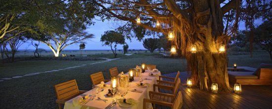Dinner unter einem Baum mit Lampions