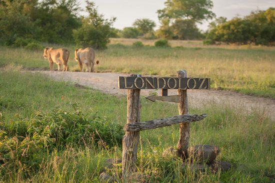 Campements du Parc Kruger | Londolozi n'attend que vous