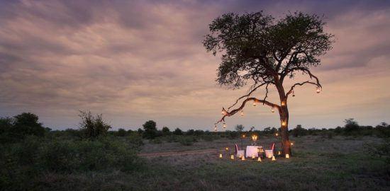 Abendessen unter einem Baum mitten im Busch bei Sonnenuntergang