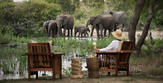 Safari-Urlauber mit Hut sitzt mit Bier in der Hand an einem Wasserloch und beobachtet eine Elefantenherde