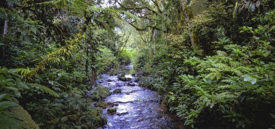 El Bosque Impenetrable de Bwindi, uno de los mejores luhgares para conocer a los gorilas en su hábitat natural.
