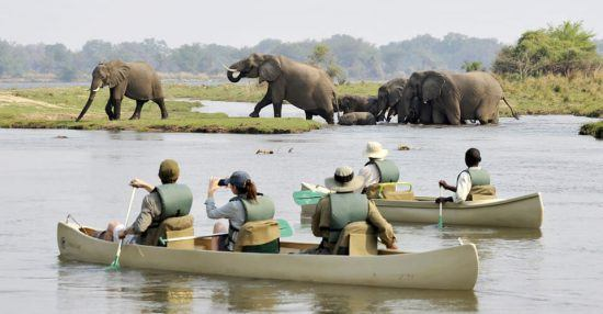 A canoe safari will allow you to get incredibly close to wildlife