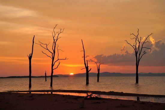A petrified forest found on the shorelines of Lake Kariba