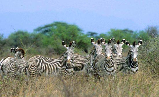 Meru National Park is rich in wildlife