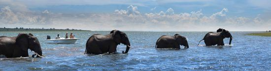 Looking at elephants from the boat