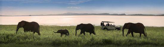 Elephants in the matusadona national park