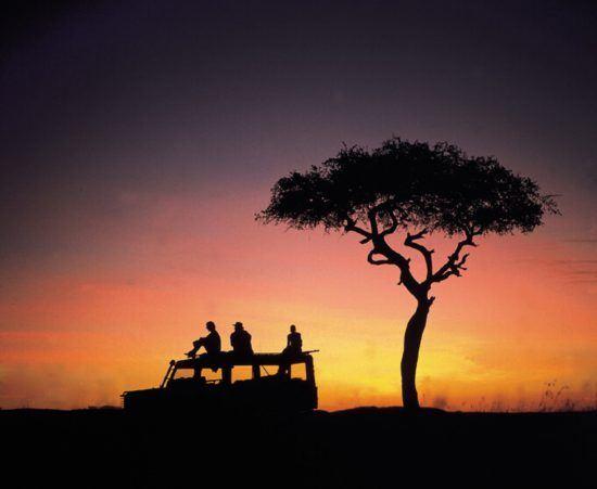 Ein Geländewagen und ein Baum, dahinter ein gelber Sonnenuntergang