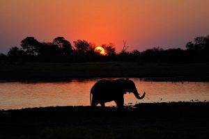 Atardecer en el delta del Okavango, Botsuana