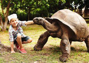 Kind und Rießenschildkröte