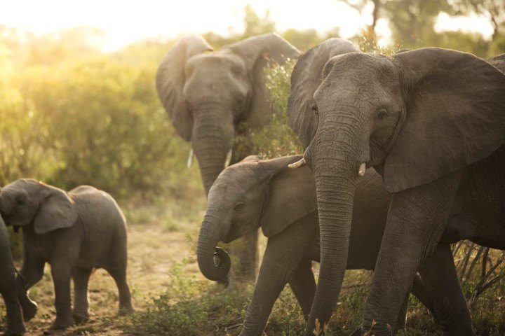 A herd of elephants passing by