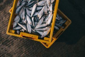 Der Fang eines Fischers auf den Malediven