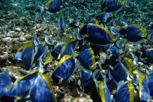 Bunte Fische im indischen Ozean