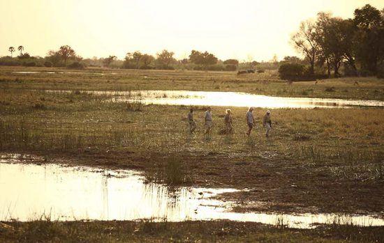 Groupe de touristes en randonnée safari à pied au Botswana.