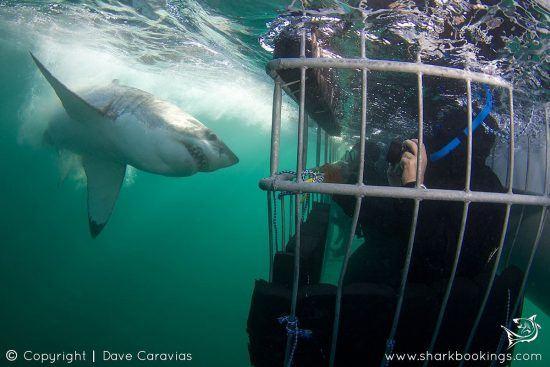 Tiburones como nunca antes los habías visto