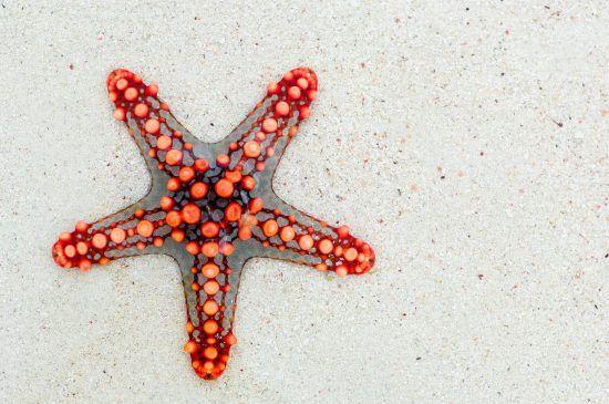 Ein roter Seestern im Sand