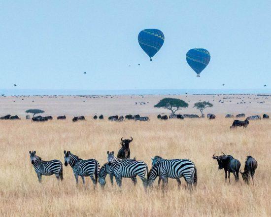 Zebras, darüber zwei Heißluftballone