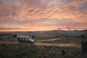 Explore a reserva Welgevonden em safaris mágicos em veículos 4x4