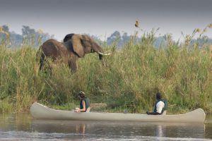 Tiere vom Kanu aus beobachten - Eine der besten Aktivitäten in Sambia