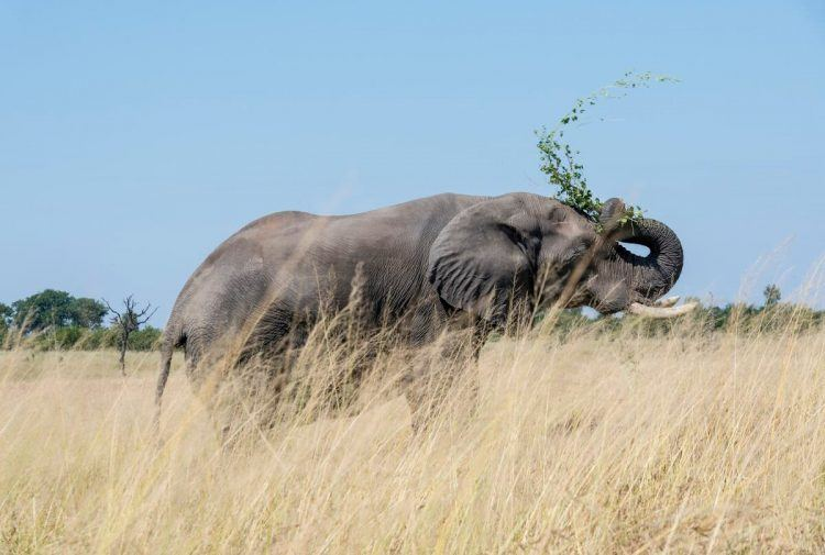 éléphant dans la réserve d'Hwange au Zimbabwe