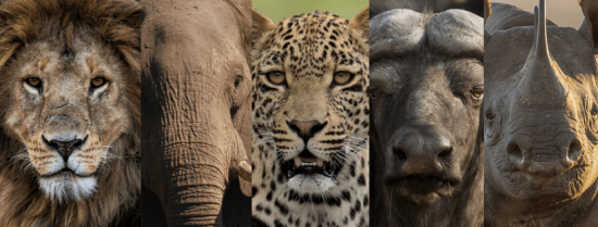 die Big Five