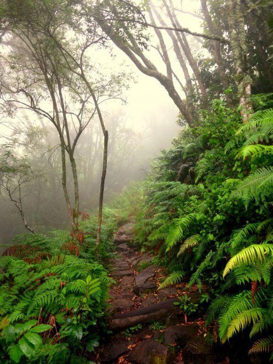 Caminando entre la bruma de Skeleton Gorge
