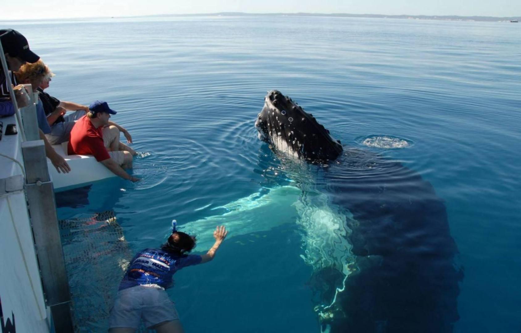 Atividade de observação de baleias em Hermanus.