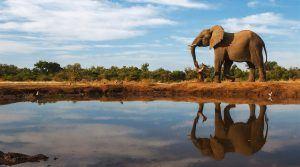 Un elefante reflejado sobre el agua en Botsuana
