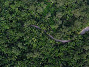 Una sinuosa carretera cruza un frondoso bosque en la Ruta de los Jardines