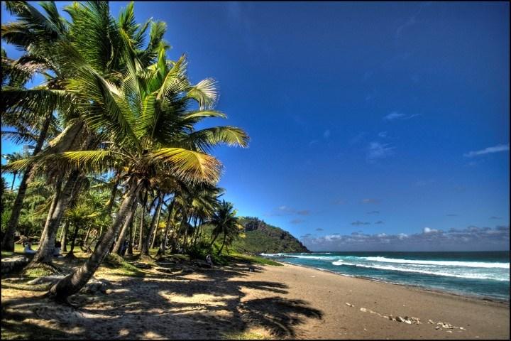Sandstrand mit Palmen vor blauem Himmel - Reiseführer La Réunion