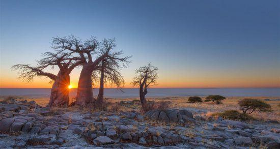 Atardece en el desierto del Kalahari, en Botsuana
