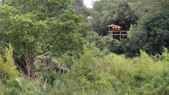 Londolozi Tree Camp in the Sabi Sand offers prime game viewing opportunities