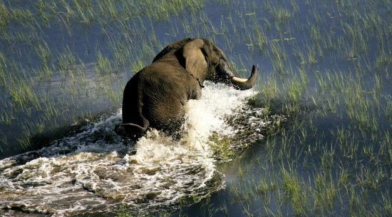 Un éléphant vu lors d'un safari sur l'eau, à bord d'un mokoro au Botswana