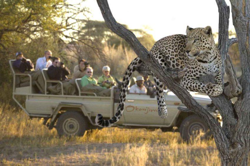 Aktivitäten in der Okonjima Luxury Bush Camp