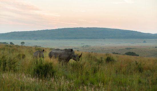 Rinoceronte-branco na Reserva Welgevoden