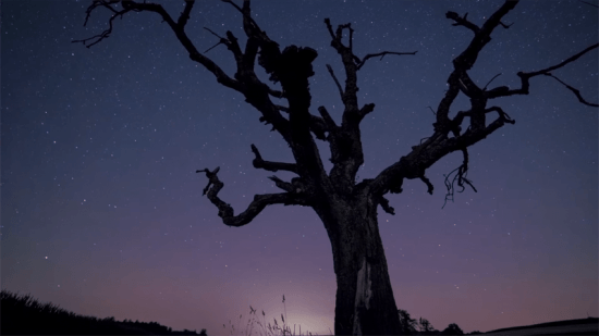 Looking up at the stars with the outline of a tree against the sky