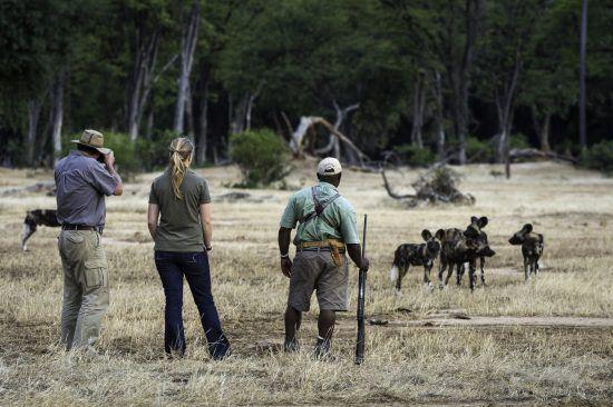 Safaris a pie, una experiencia única