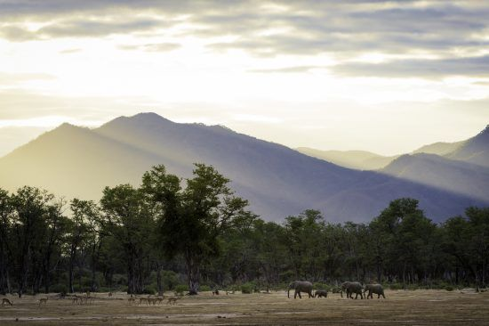 Elephants in afternoon light at Mana Pools