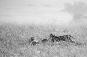 Photo en noir et blanc prise avec un long objectif