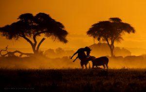 Photo prise au crépuscule, montrant des silhouettes d'arbres et d'animaux