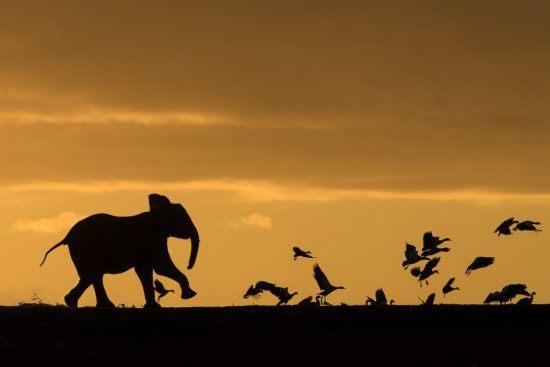 África y su esplendor