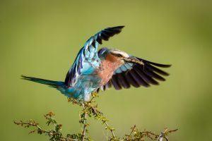 África en imágenes: Un colorido pájaro