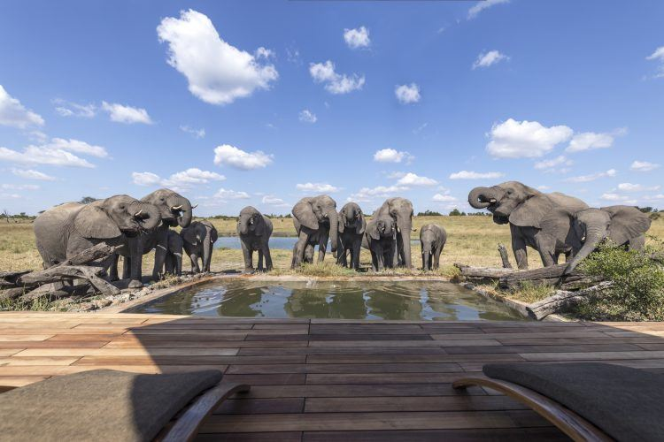 Elephants drinking from the pool